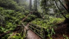 Beautiful Forest Path 32573