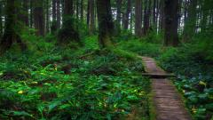 Beautiful Forest Path Wallpaper 32565