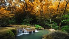 Beautiful Forest Stream 34430