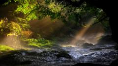 Beautiful Forest Stream Wallpaper 34429