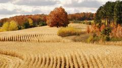 Beautiful Harvest Wallpaper 37759