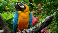 Beautiful Parrot Wallpaper 19871