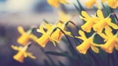 Beautiful Yellow Bokeh Wallpaper 39492