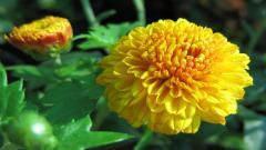 Beautiful Yellow Flowers 14150
