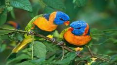 Bird Wallpaper 9281