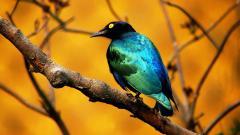 Bird Wallpaper 9286