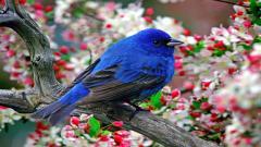 Bird Wallpaper 9289