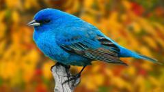 Bird Wallpaper 9290