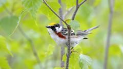 Bird Wallpaper 9291