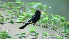Bird Wallpaper 9295
