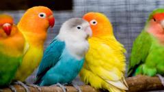 Bird Wallpaper 9297