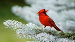 Bird Wallpaper 9298