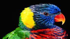 Bird Wallpaper 9300
