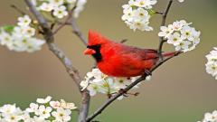 Bird Wallpaper 9302
