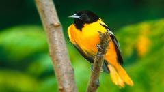 Bird Wallpaper 9304
