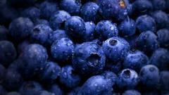 Blueberries 20401