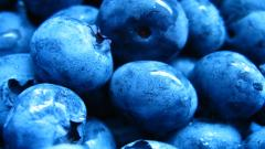 Blueberries 20404
