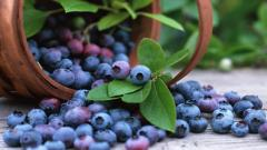 Blueberries 20406
