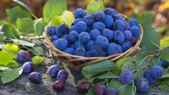 Blueberry Pictures 20408