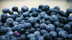 Blueberry Wallpaper 20400