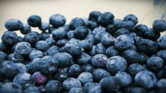 Blueberry Wallpaper 20400