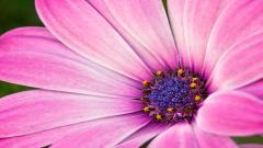 Bright Pink Flower 27839
