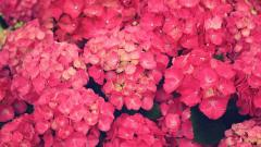 Bright Pink Flowers 27837