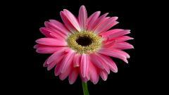 Bright Pink Flowers Wallpaper 27833