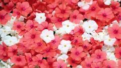 Bright Pink Flowers Wallpaper 27840