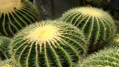 Cactus Wallpaper 16602