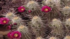 Cactus Wallpaper 16603