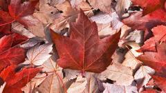 Canada Nature Flag Wallpaper 22647