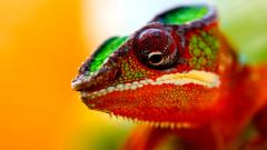 Chameleon HD 23637