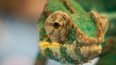 Chameleon Pictures 23639