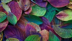 Colorful Leaves 30070