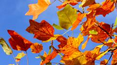 Colorful Leaves Background 30075