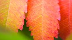 Colorful Leaves HD 30073