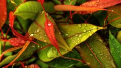 Colorful Leaves HD 30087