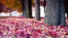 Colorful Leaves Wallpaper 30072