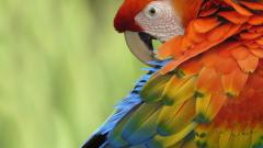 Colorful Parrot Wallpaper 19872