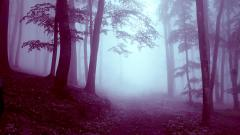 Cool Foggy Wallpaper 31395