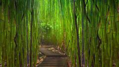 Cool Forest Path Wallpaper 32567