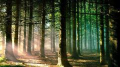 Cool Forest Sun 33431