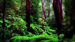 Cool Rainforest Wallpaper 24484