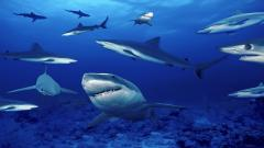 Cool Shark Wallpaper 23664
