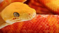 Cool Snake Wallpaper 29862