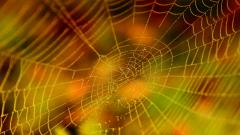 Cool Spider Web Wallpaper 41570