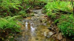 Creek Pictures 31427