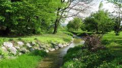 Creek Pictures 31429