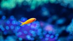 Cute Fish Wallpaper 22319
